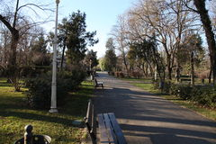 Träd i en parc Royaltyfria Foton