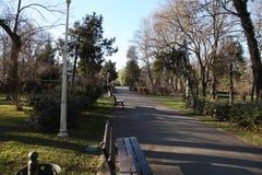 Träd i en parc Arkivfoton