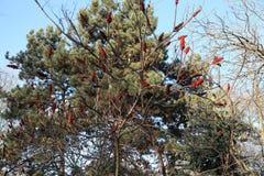 Träd i en parc Arkivbilder