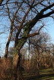 Träd i en parc Arkivfoto