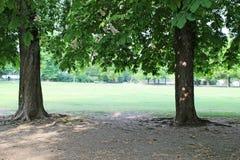 Träd i en parkera Arkivfoto