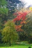 Träd i en parkland Arkivfoton