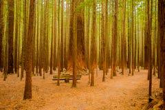 Träd i en röd wood skog arkivfoto
