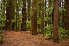 Träd i en röd wood skog arkivfoton