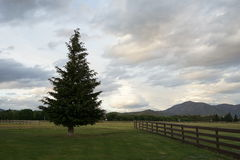 Träd i en ranch Arkivfoton