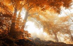 Träd i en scenisk dimmig skog i höst Arkivfoto