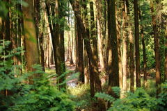 Träd i en skog Arkivfoto