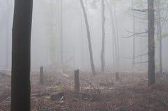 Träd i en skog i dimma Royaltyfria Bilder