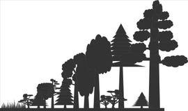 Träd i en skog som stiger royaltyfria bilder