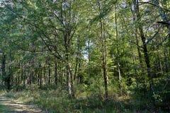 Träd i en skogsmark med solsken Royaltyfri Foto
