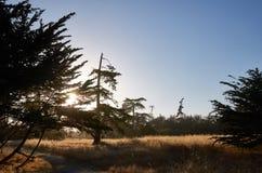 Träd i en solnedgång Arkivbild