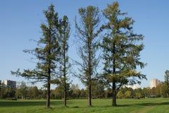 Träd i en stad parkerar royaltyfria foton