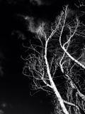 Träd i en svart bakgrund Royaltyfri Fotografi