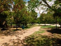 Träd i en väg Arkivfoto