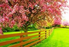 Träd i en vårträdgård Fotografering för Bildbyråer