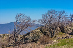 Träd i ett berg Royaltyfria Foton