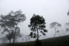 Träd i ett dimmigt landskap Royaltyfria Foton