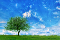 Träd i ett fält Arkivbild