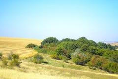 Träd i ett fält på en solig dag Fotografering för Bildbyråer