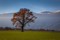 Träd i ett fält på nedgången Royaltyfria Bilder