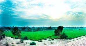 Träd i ett grönt vetefält arkivbilder
