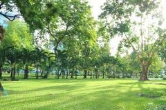 Träd i ett offentligt parkerar i Bangkok, Thailand Royaltyfria Bilder