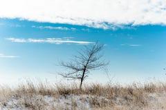 Träd i ett vinterfält Royaltyfria Bilder