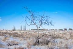 Träd i ett vinterfält Arkivfoto