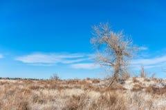 Träd i ett vinterfält Royaltyfri Bild