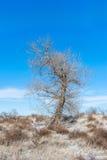 Träd i ett vinterfält Arkivbilder
