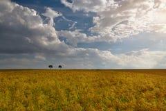 Träd i fältet på jordbruks- landskap Arkivbilder