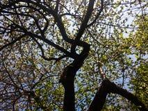 Träd i färg royaltyfri bild