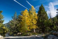 Träd i färg Arkivfoton