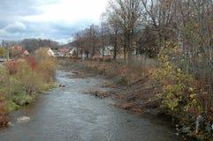 Träd i floden Fotografering för Bildbyråer
