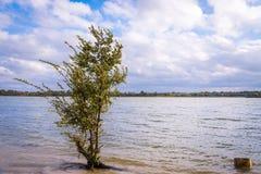 Träd i floden royaltyfri foto