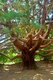 Träd i form av en bläckfisk Royaltyfria Bilder
