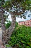 Träd i formen av en katapult och en blommabuske arkivfoton