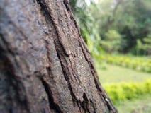träd i fred arkivbild