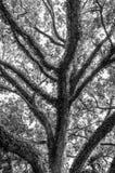 Träd i ganska hoppAL B&W Arkivbilder