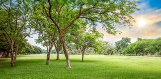 Träd i golfbana Fotografering för Bildbyråer