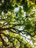 Träd i gräsplan Arkivbild