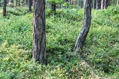 Träd i grön äng nära havet Royaltyfri Bild