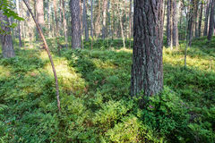 Träd i grön äng nära havet arkivfoton