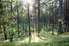 Träd i grön äng nära havet Royaltyfria Bilder