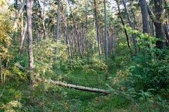 Träd i grön äng nära havet Arkivfoto