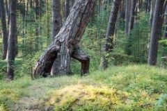 Träd i grön äng nära havet Arkivbild