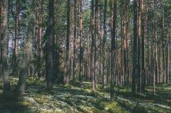 träd i grön skog med mossa och höstfärger - tappningretr arkivbild