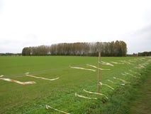 Träd i grönt fält Fotografering för Bildbyråer