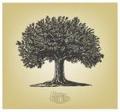Träd i gravyrstil Royaltyfri Bild