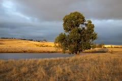Träd i guld- ljus Royaltyfri Bild
